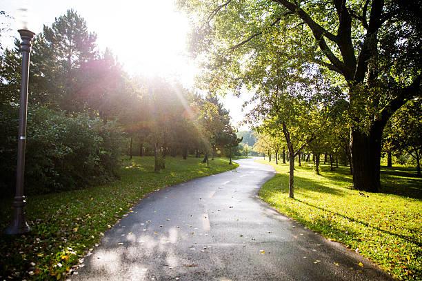 Morning light in the park stock photo