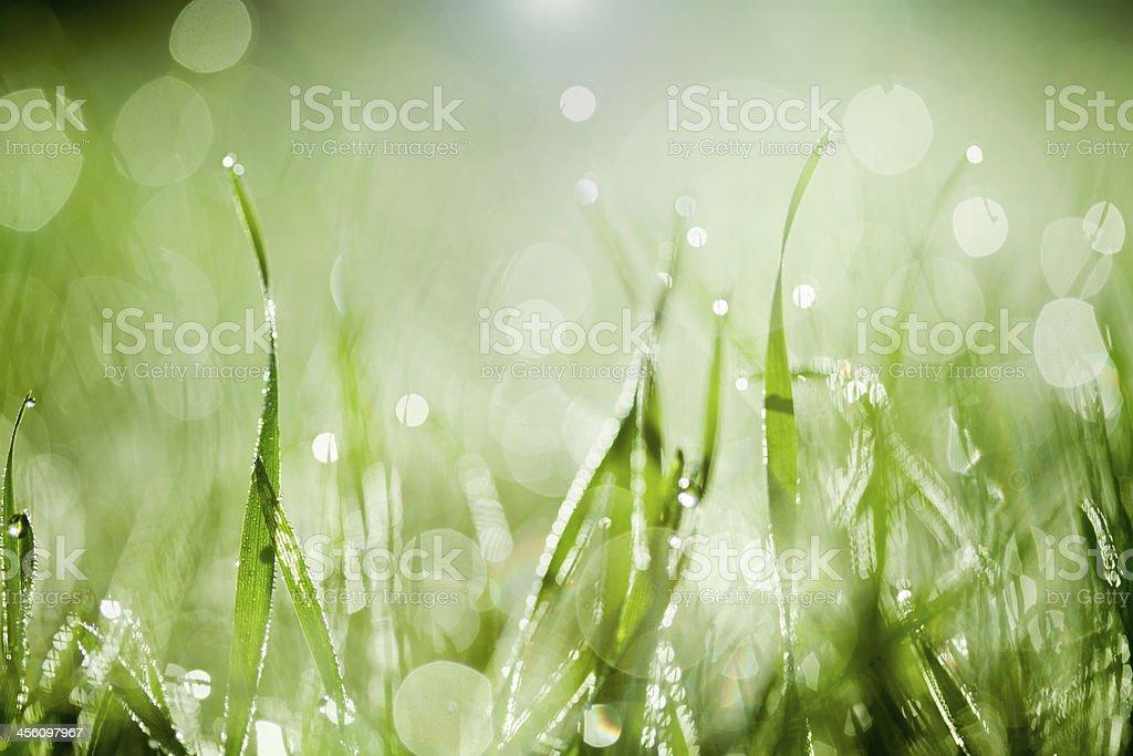 Morning light on blades of grass stock photo