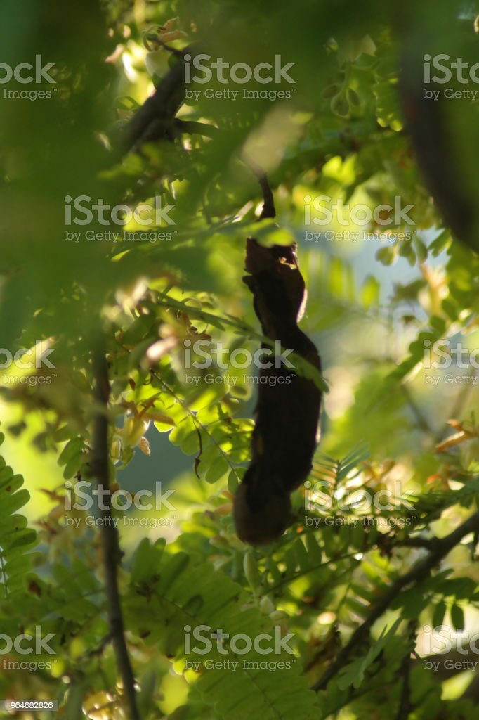 Morning light on tree royalty-free stock photo