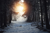 Morning light over forest pathway