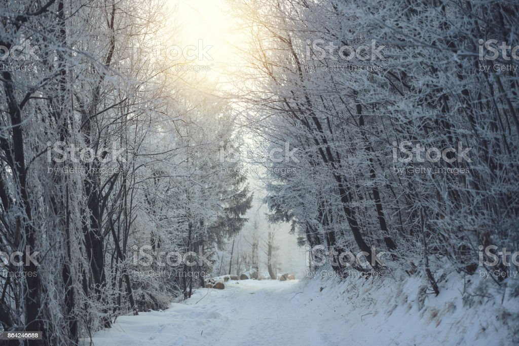Morning light over forest pathway royalty-free stock photo