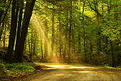 Morning sunlight falls on an old forest road