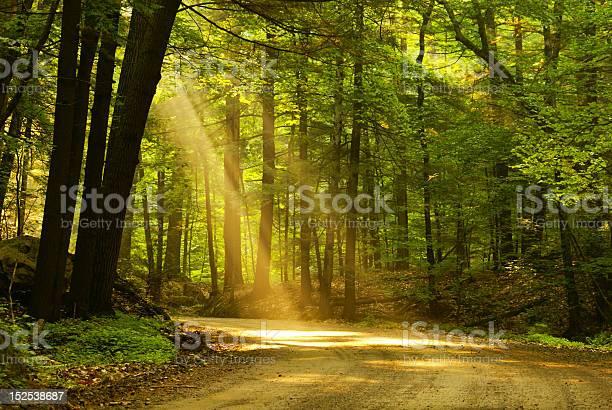 Manhã De Luz - Fotografias de stock e mais imagens de Amanhecer