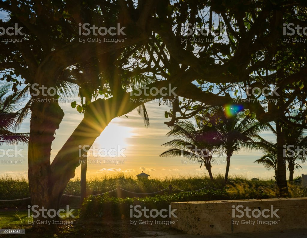 morning light rays and sun flares shinig throught the trees at the...