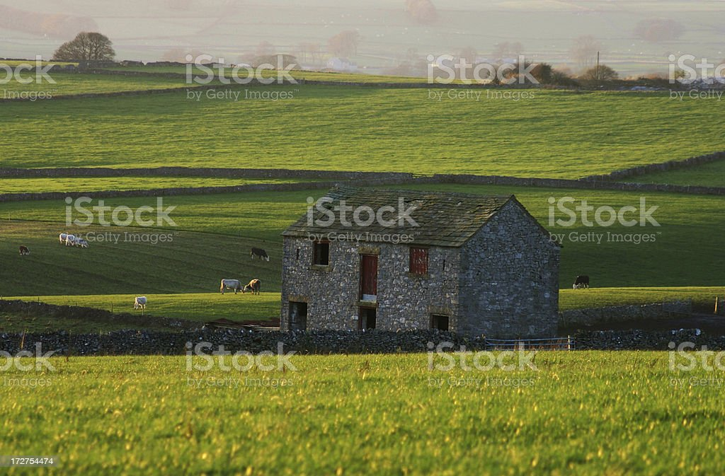 Morning light shining on the old dairy cattle barn royalty-free stock photo