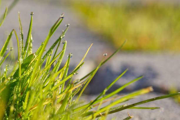 Gotas de luz de la mañana calienta el rocío en la hierba. - foto de stock