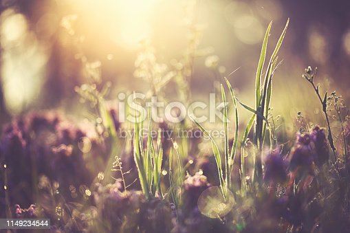 Morning lights at the fresh green meadow in spring