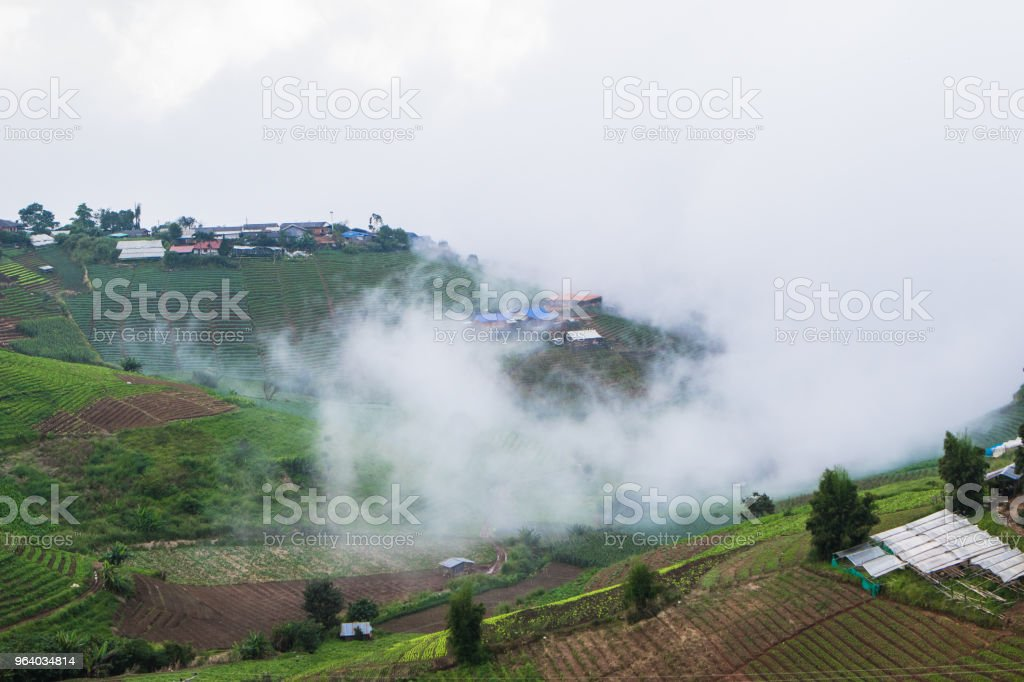 Morning mist at the top of the hill. - Royalty-free Above Stock Photo