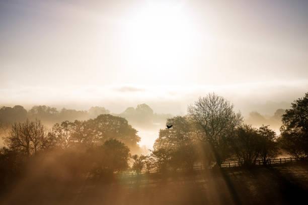 morning mist in warwickshire - vogel herfst stockfoto's en -beelden