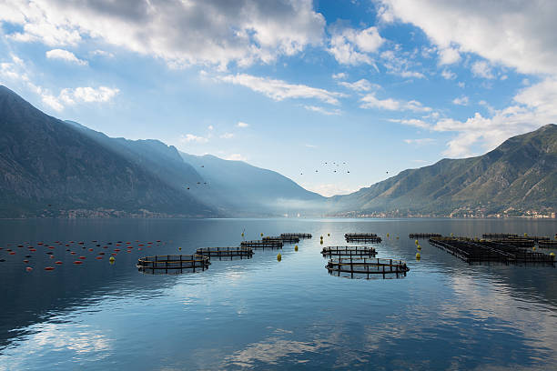 morning mist on kotor bay - aquaculture stock pictures, royalty-free photos & images