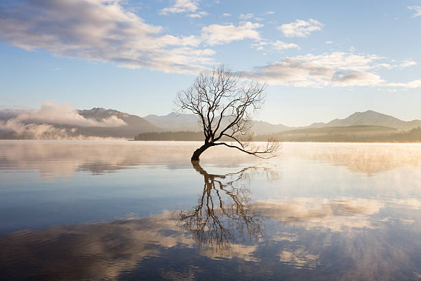 Morning mist on lake Late Autumn, just after sunrise and the morning mist rises from Lake Wanaka, New Zealand. Silhouetted against the light is Wanaka's lone willow tree which is situated just off of the lake shore. This tree had humble beginnings as a fence post, but now thousands of people travel to see (and photograph it) it each year. tranquil scene stock pictures, royalty-free photos & images
