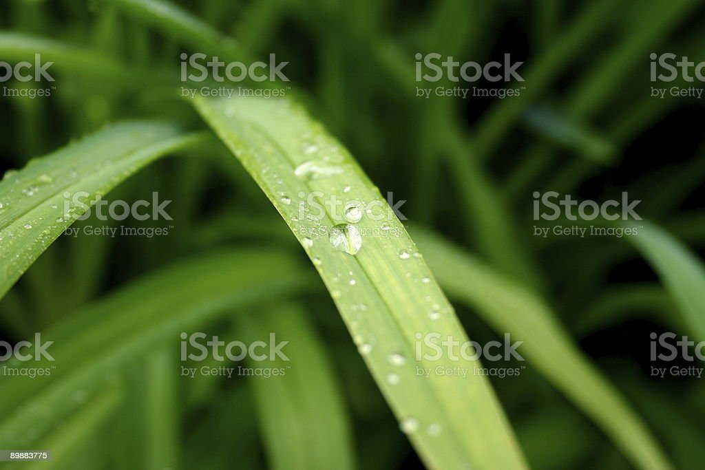 Morning mist on tall grass royalty-free stock photo