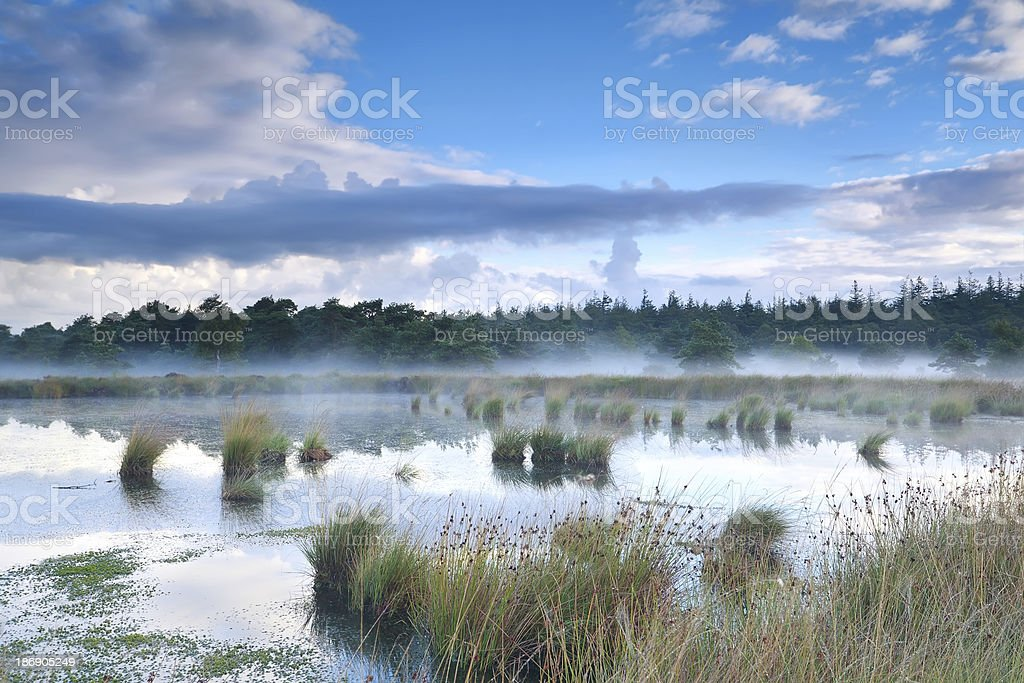 morning mist over bog royalty-free stock photo