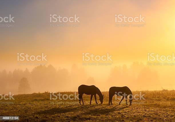 Morning mist picture id466613194?b=1&k=6&m=466613194&s=612x612&h= 8dgeohu4rmx6xj61 kjsjdpuohtn17i8f5kzp6vpf8=