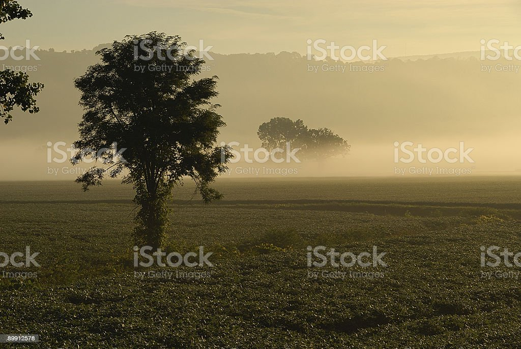 Morning Mist royalty-free stock photo