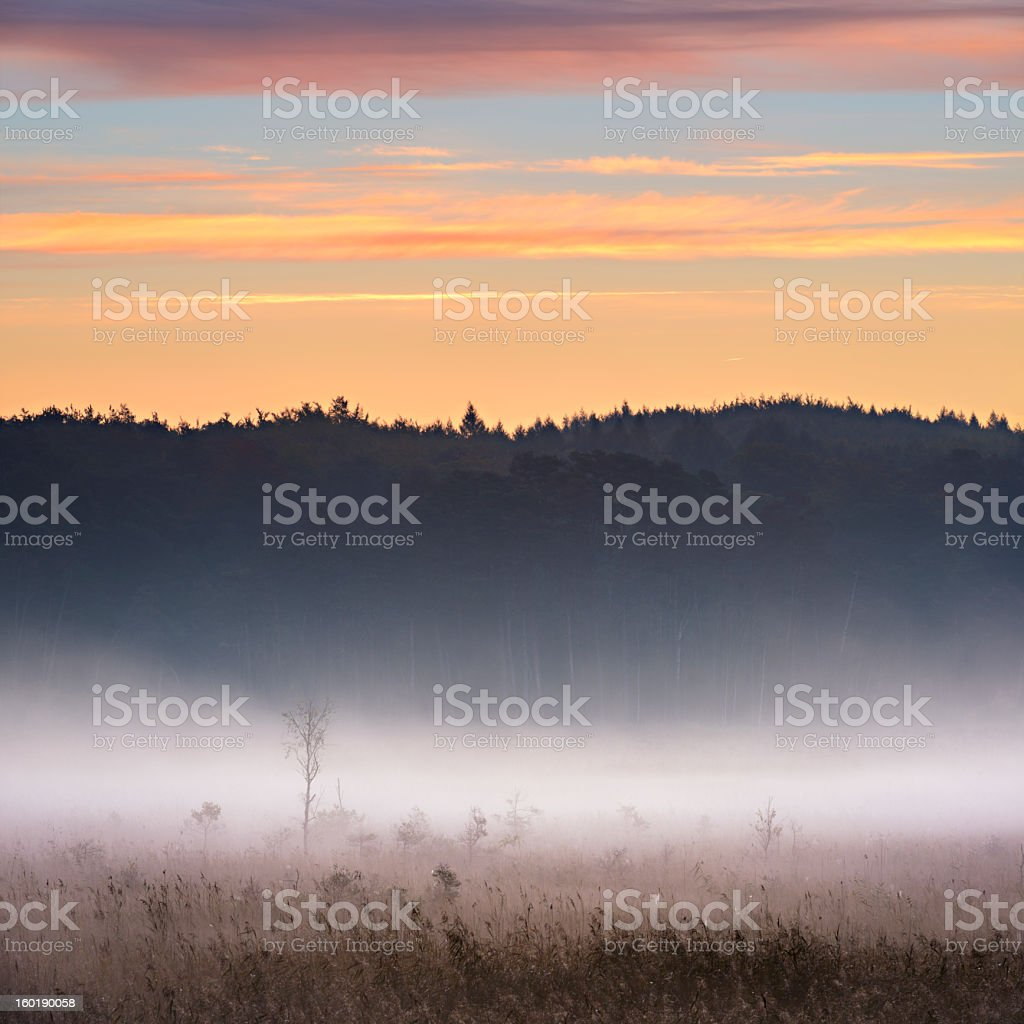 Morning Mist rising from Enchanted Moor at Sunrise stock photo