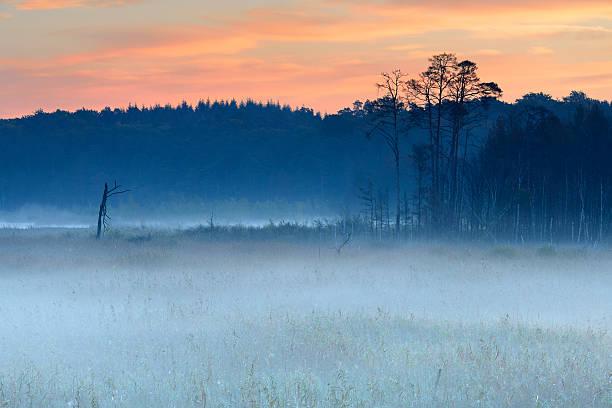 morgen nebel hoch von verwunschenen moor bei sonnenaufgang - nationalpark müritz stock-fotos und bilder
