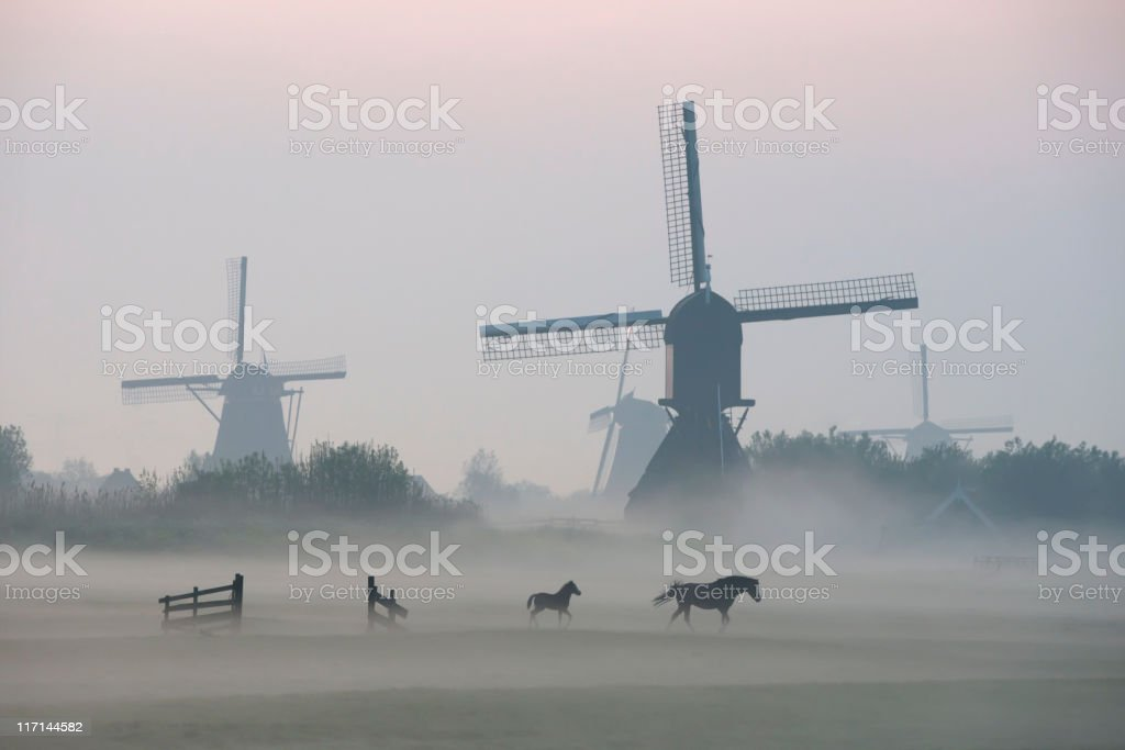 Morning mist surrounds foal and mare while walking before windmills stock photo