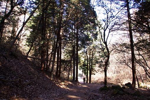 아침 등산 길