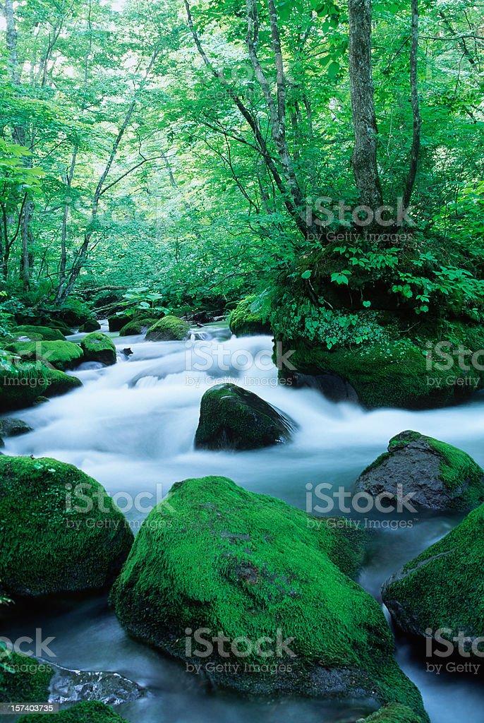 Morning Mountain Stream royalty-free stock photo