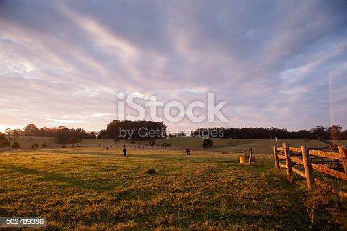 Early morning in rural NSW Australia