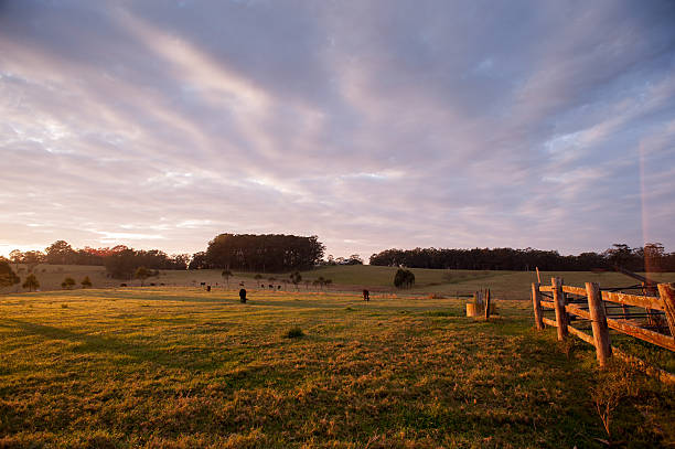 Morning on the Farm Early morning in rural NSW Australia paddock stock pictures, royalty-free photos & images