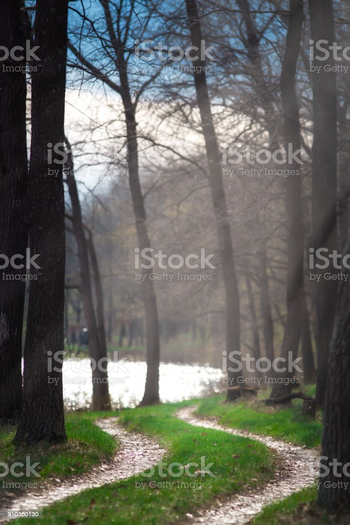 Morning on the forest lake.Morning in the forest. stock photo