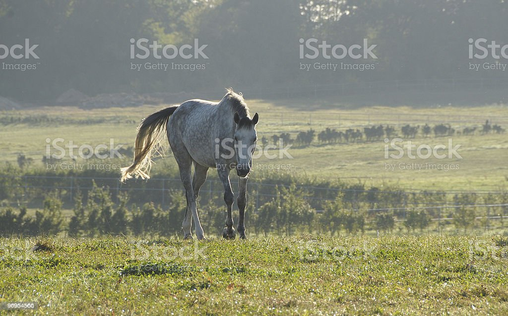 morning on the pasture royalty-free stock photo