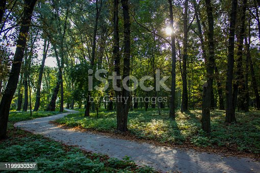 morning park outdoor place with sunny weather and sun rays between trees empty paved cycle road