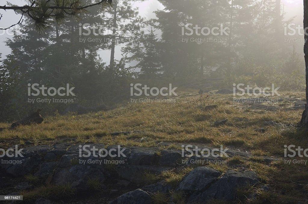 Mattina foto stock royalty-free