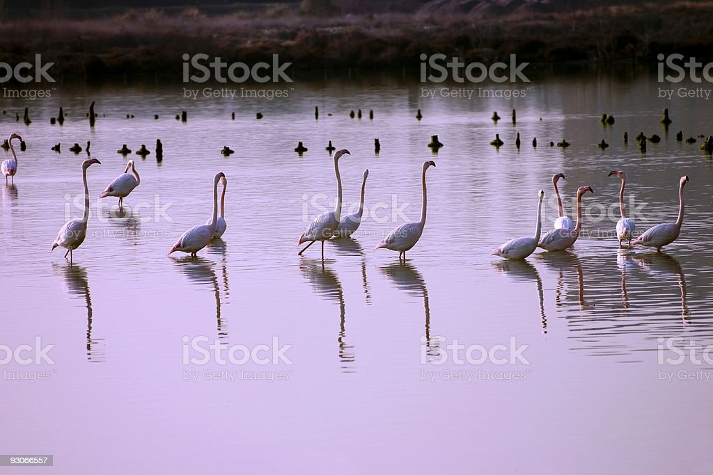 Morning pond royalty-free stock photo