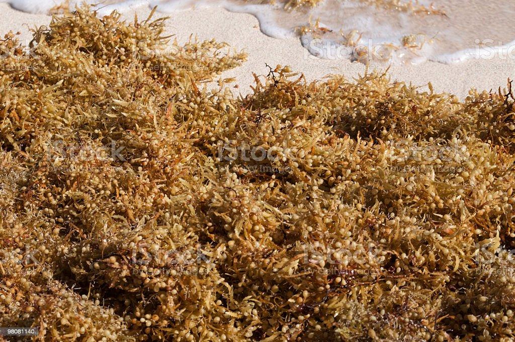 Mattina sulla spiaggia mare weed foto stock royalty-free