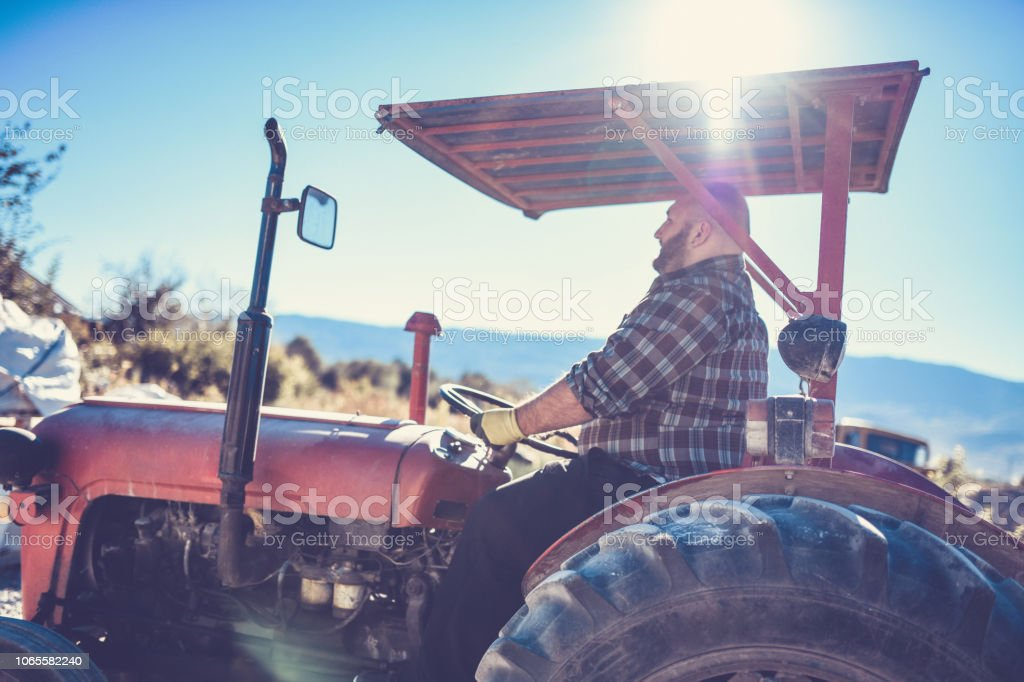 Morning Shift For Tractor Driver stock photo