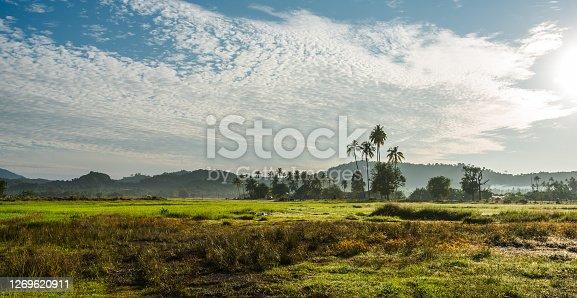 morning shot at langkawi paddy field - image