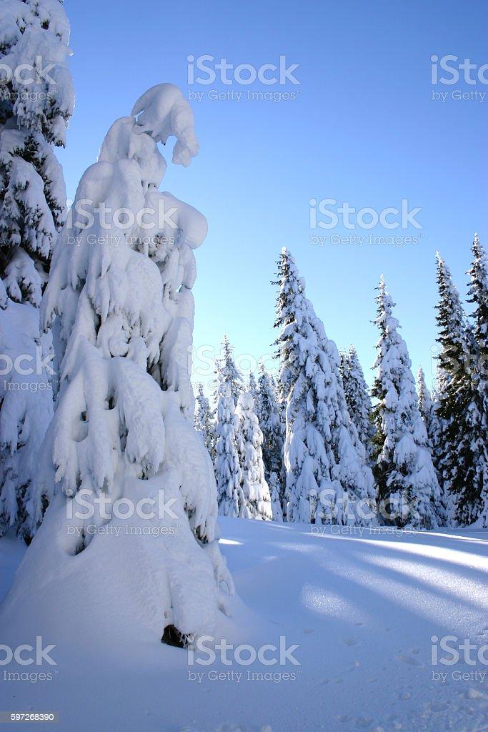 morning silence in a snowy forest Lizenzfreies stock-foto