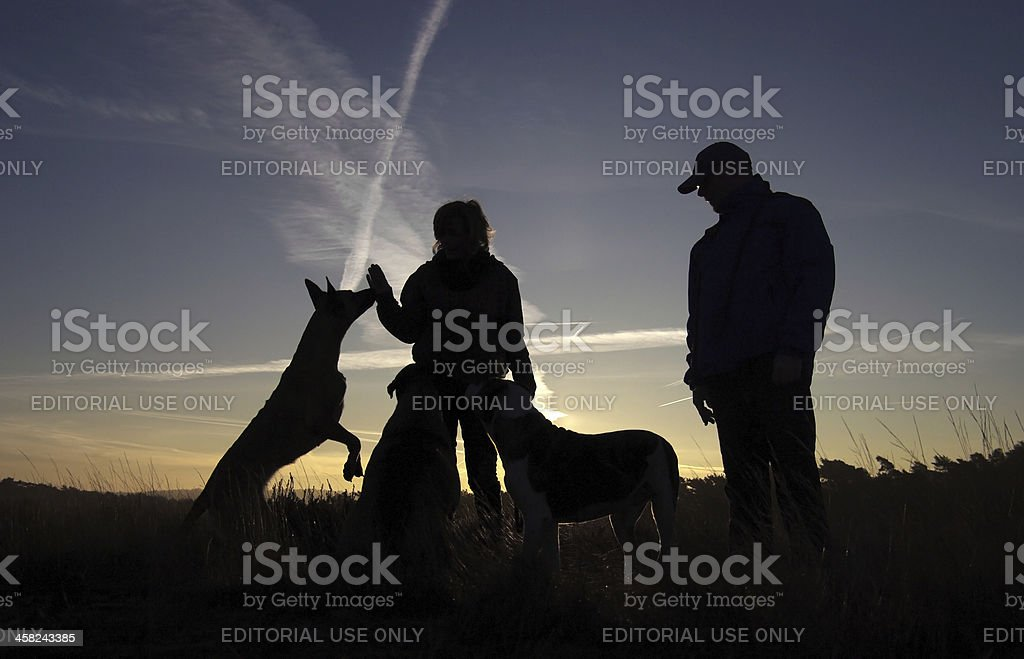 Morning silhouette royalty-free stock photo
