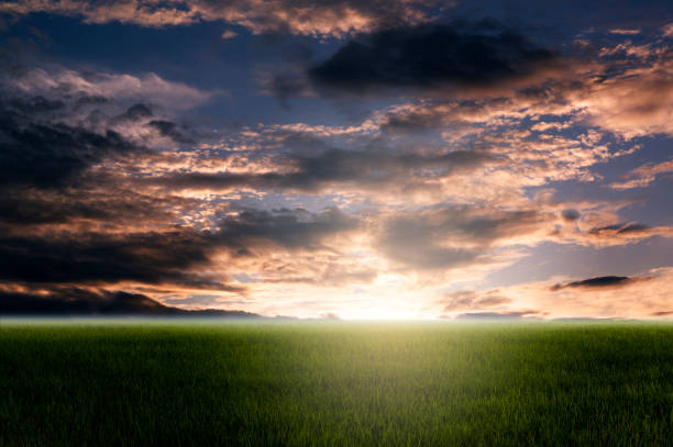 Morgenhimmel und grüne Felder. – Foto
