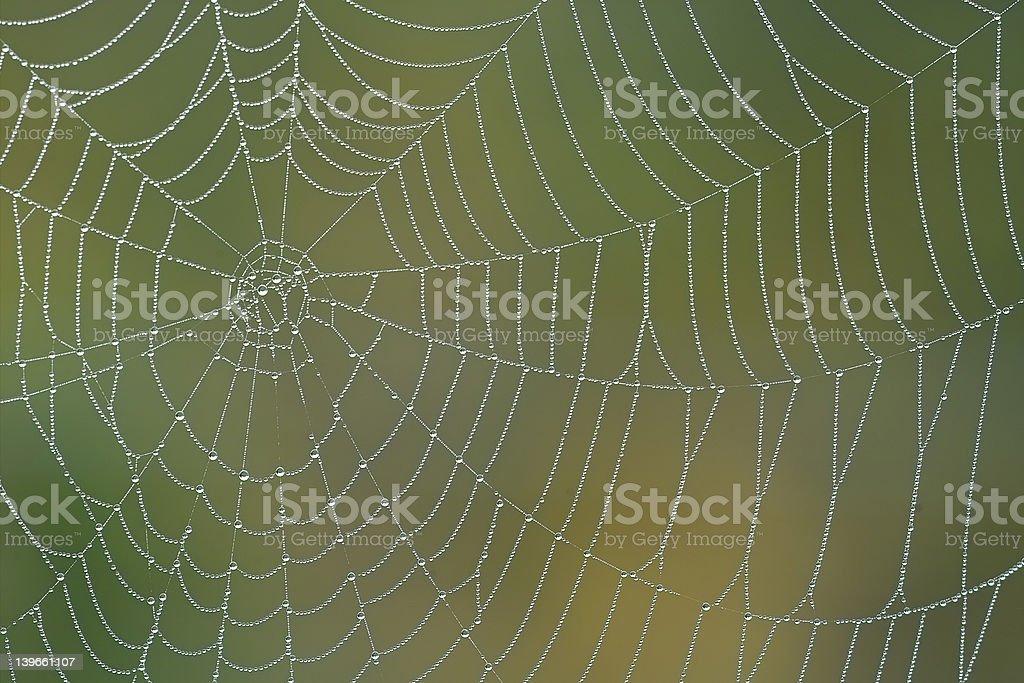 Morning spiderweb royalty-free stock photo