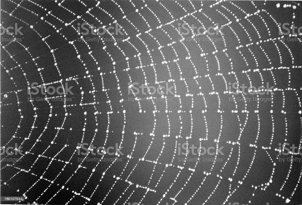 Morning Spiderweb royalty-free stock photo