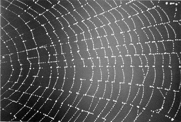 Morning Spiderweb stock photo