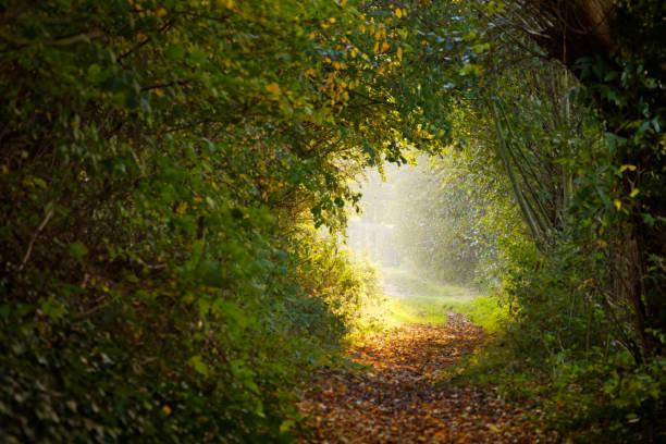 Morning summer light path (medium) stock photo