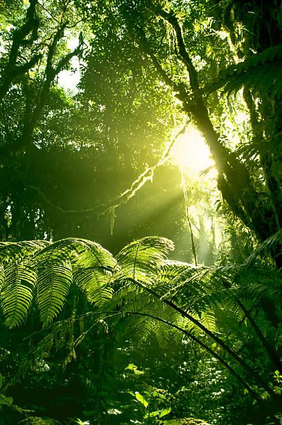 Morgensonne in Costa Rica Regenwald – Foto