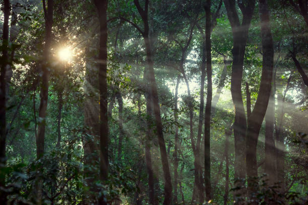 Morning sun in the tropical dense rainforest of Africa stock photo
