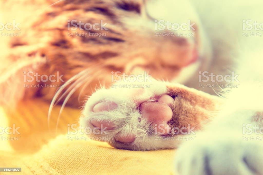 Morning sun light on the sleeping red cat stock photo