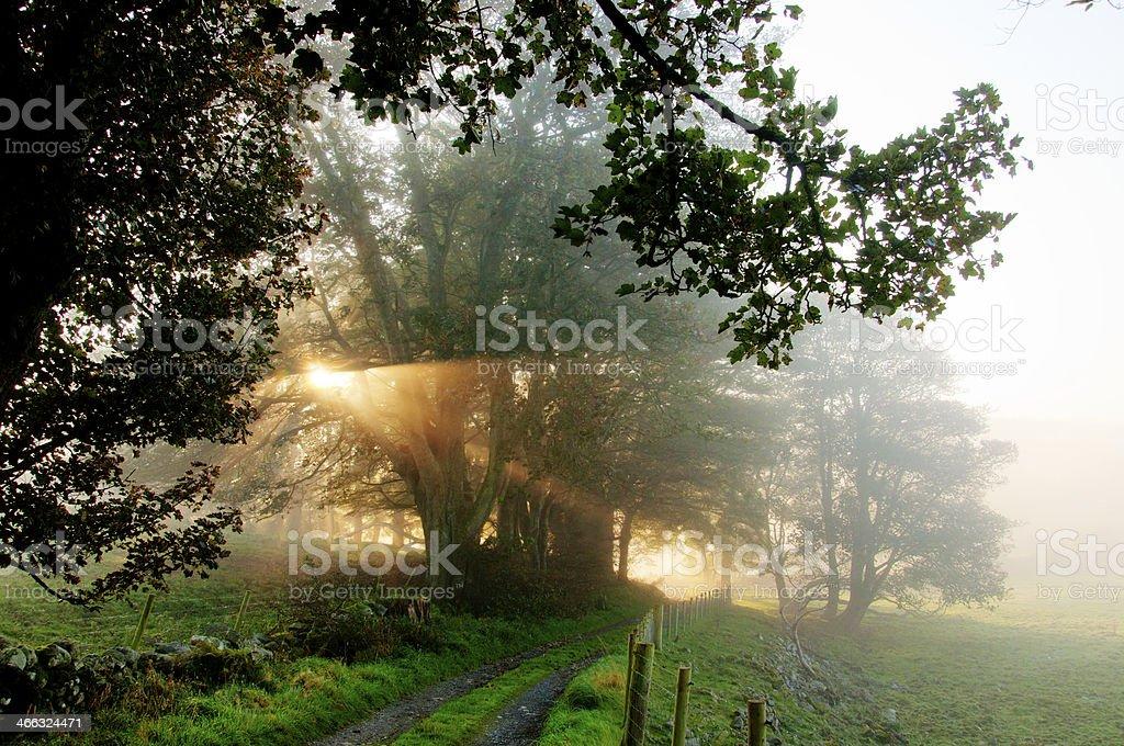Morning sun – Foto