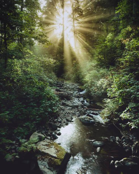 morning sun rays at oswald west state park, oregon - wybrzeże północno zachodnie pacyfiku zdjęcia i obrazy z banku zdjęć