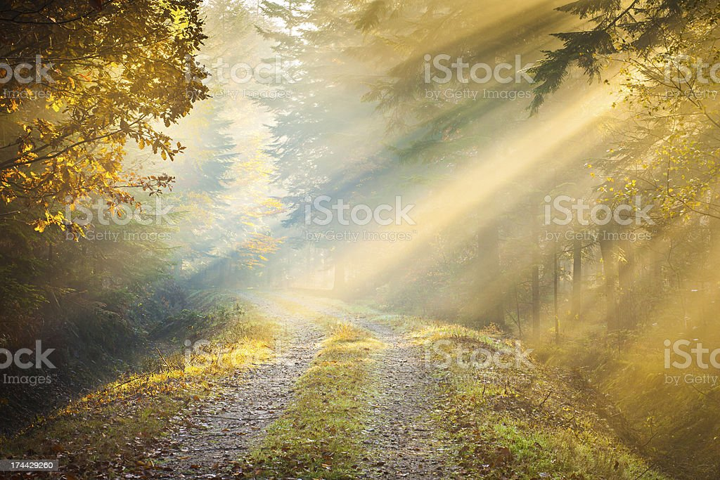 Morning Sun Rays penetrating Fogy Forrest royalty-free stock photo