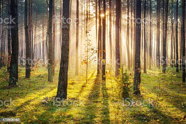 Morning Sun Rays Penetrating Forest Xxxl Hdr Image Stock Photo - Download Image Now