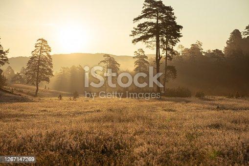Golden sunrise over a beautiful landscape of Zlatibor mountain.
