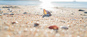 Morning sun shines on the golden sand and seashells of a New Zealand beach